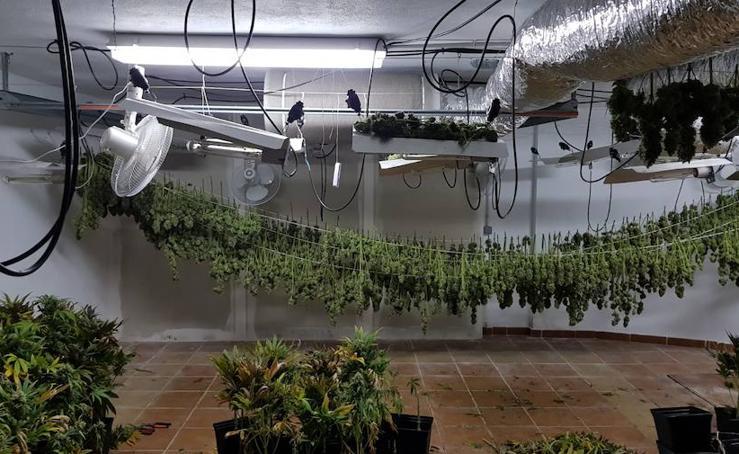 Así es el cultivo, preparación y venta de la marihuana en Granada, visto desde dentro de una plantación