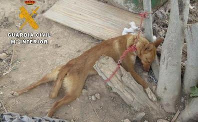 Investigan al dueño de una finca de Cogollos de la Vega que tenía 16 perros al borde de la muerte