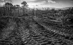'Deforestación en Segura' gana el V Concurso Fotográfico de Naturaleza