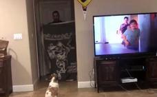 Desaparece ante tu perro: el cómico reto viral que arrasa en todo el mundo