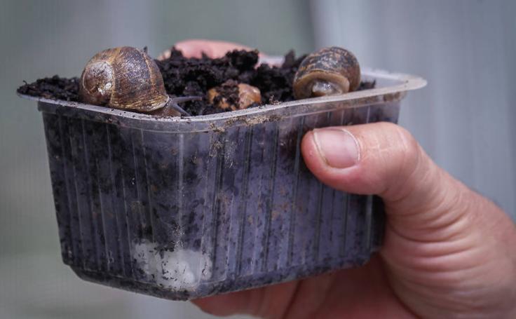 El nuevo 'caviar' blanco se produce en Cenes de la Vega