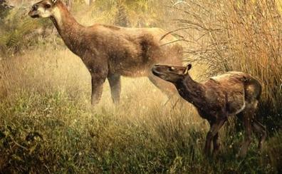 Encuentran dos nuevas especies extintas y desconocidas en Bolivia