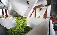 Así ha terminado la campaña de aceite de oliva en España