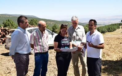 Combaten el cambio climático con regeneración en la masa forestal de Sierra Nevada
