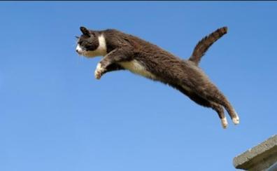 Detenido por empeñarse en hacer volar a su gato