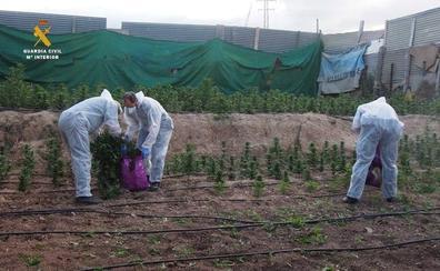 La Guardia Civil interviene 21.000 plantas de marihuana durante el mes de junio en la provincia de Granada