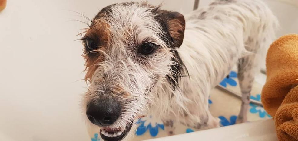 La emotiva historia de una perra y su cachorro, que ahora buscan dueño en Jaén