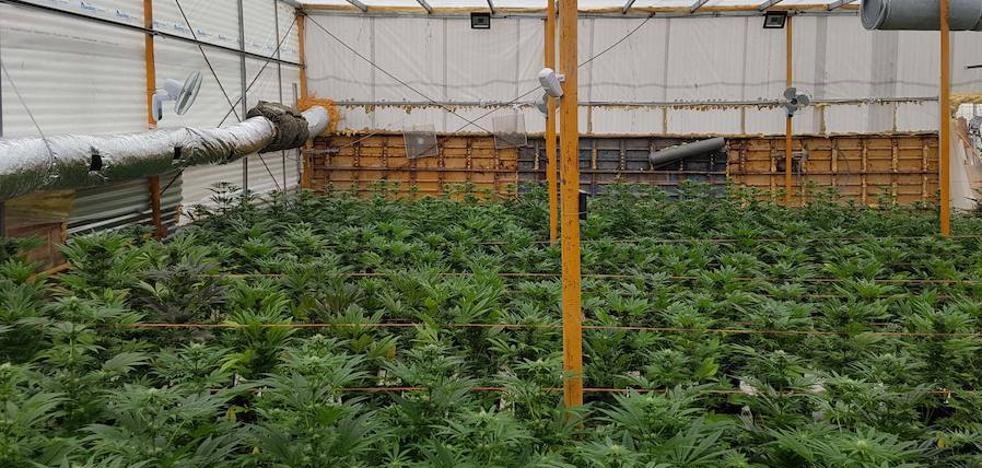 Incautan 4.000 kilos de marihuana al mes en los pueblos de la provincia de Almería