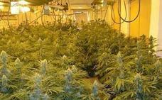 Le piden 6 años cárcel por cultivar droga con un enganche ilegal a la luz en Motril