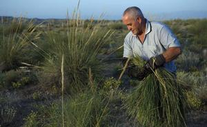 Denuncian que sólo se ha ejecutado el 12% del Programa de Desarrollo Rural de Andalucía
