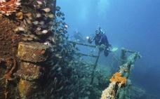 La pesca enseña a los peces a reconocer los arpones