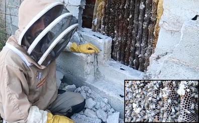 Retiran un 'mega-enjambre' de abejas en Granada: «Es inmenso, el más grande que he rescatado»