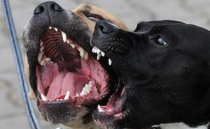 Los perros no se reconcilian: la domesticación tiene la culpa