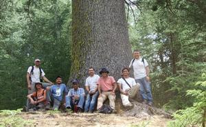 La UJA estudia la situación de los bosques