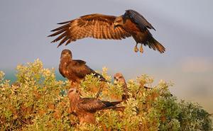 Denuncian ante la Fiscalía la destrucción del 'Pinar de Castilléjar', zona catalogada para la Conservación de Rapaces'