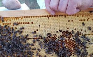 Investigadores de la UAL relacionan los plaguicidas con la pérdida de funciones cerebrales en abejas