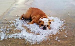 Las razas de perros más vulnerables a los golpes de calor: ¿tienes uno de ellos?