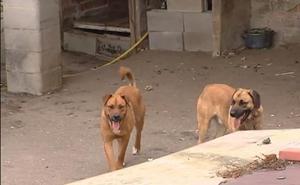 Muere un anciano de 87 años atacado por los seis perros de su vecino