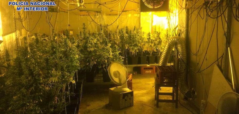 Desmantelan en Pescadería un supermercado '24 horas' de droga y una plantación de marihuana