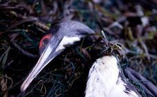 Las luces LED en redes de pesca evitan otras muertes accidentales