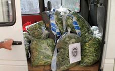 Decomisan 16 kilos de marihuana en el ático de una vivienda en Atarfe