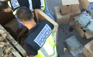Juzgan a una banda por el envío de 203 kilos de cogollos de marihuana escondidos entre cebollas desde Almería