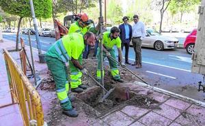 Parques concluye la reposición de 600 árboles y la eliminación de 300 alcorques