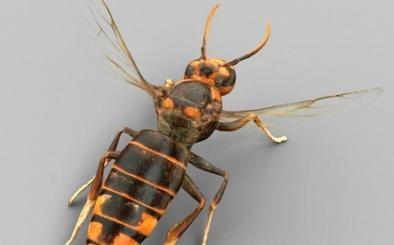 Así es la avispa asiática que ya ha matado a una persona en España