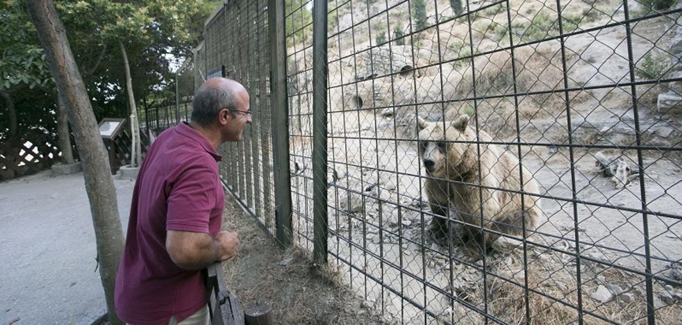 Almuñécar tendrá que 'colocar' a trece animales exóticos para reabrir Peña Escrita como complejo rural