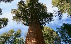 Los árboles más grandes y altos son más vulnerables al cambio climático