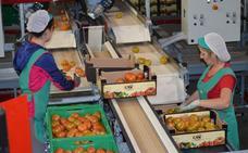 CASI iniciará la campaña con el doble de volumen de producto ecológico