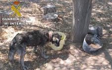 La Guardia Civil investiga por maltrato animal a un motrileño que tenía abandonados a dos perros en su finca