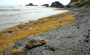 La nueva protección de Alborán limita la pesca de gamba roja a fondos de más de 100 metros