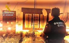 Encuentran 500 plantas de marihuana en una vivienda de Roquetas de Mar