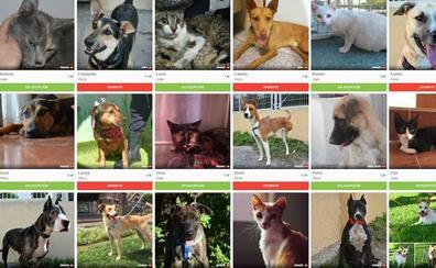 El Ayuntamiento fomentará la adopción de animales del zoosanitario a través de anuncios en una web