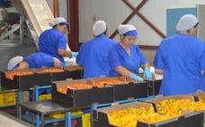Desciende un 15% el valor de la comercialización hortofrutícola