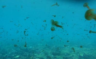 Bandera amarilla por medusas en Calahonda y Castell de Ferro