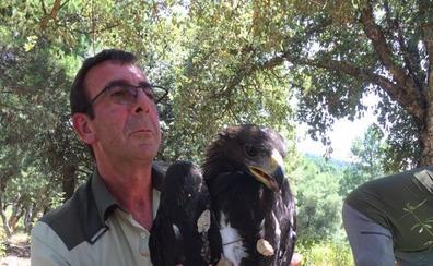 Rescatan un ejemplar de águila real