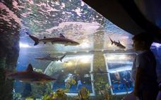 El BioDomo de Granada cumple dos años con más de 415.000 visitas