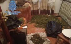 Dos detenidos con 15 kilos de marihuana picada en Jaén