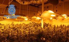 Detenido tras intervenirse 700 plantas de marihuana en una nave industrial de Churriana de la Vega