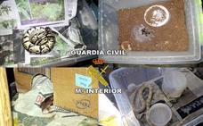 Dos detenidos en Torreperogil con 78 plantas marihuana y varias serpientes