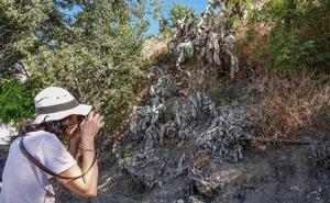 La plaga de cochinillas desespera a los vecinos de la Carretera de la Sierra