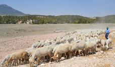COAG solicita que se aumenten las ayudas asociadas a la ganadería y a los frutos secos en la provincia