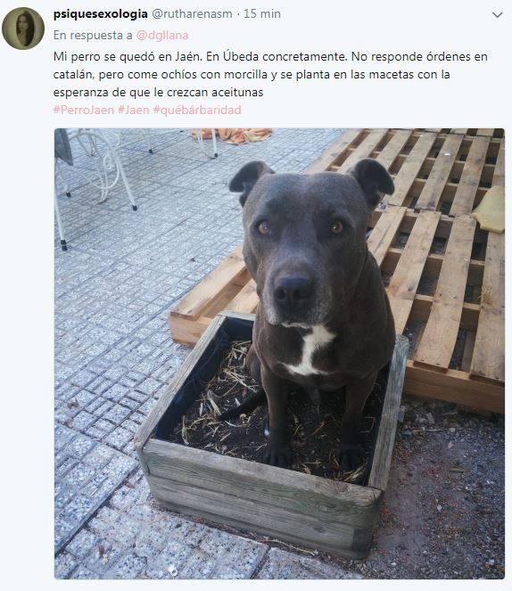 Los tuits de respuesta al 'perro de Jaén' que están arrasando en la Red