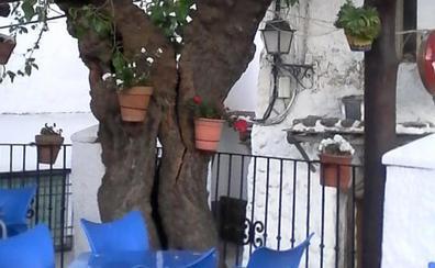 Vecinos de la Alpujarra se movilizan para salvar un árbol centenario