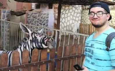 Cierran el zoo que exhibía a sus burros pintados de cebras