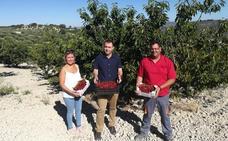 La campaña de la cereza deja en Granada unos 260.000 kilos más de producción respecto a 2017