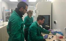 Negativo en 'Xylella Fastidiosa' en las 1.400 muestras recogidas tras el caso detectado en El Ejido