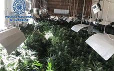 Desmantelado en Almería un cultivo con 232 plantas de marihuana y enganche ilegal a la red y detenido su dueño